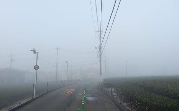 茶畑も霧に包まれている