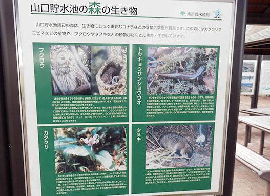 「狭山湖(山口貯水池ダム)」の森の生き物